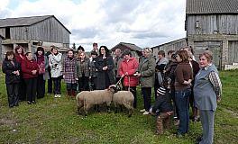 Dovanojamos Juodagalvės avys