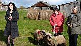 Dovanojamos juodgalvės avys