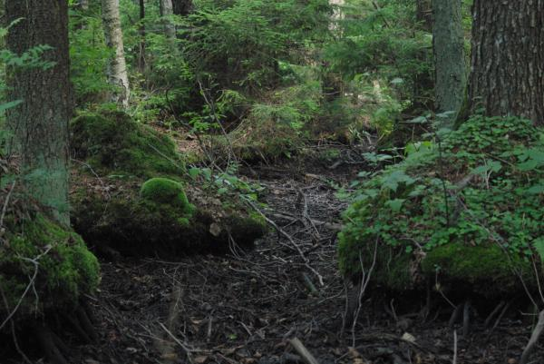 Juodalksnio riastas / Erlenbruchwald