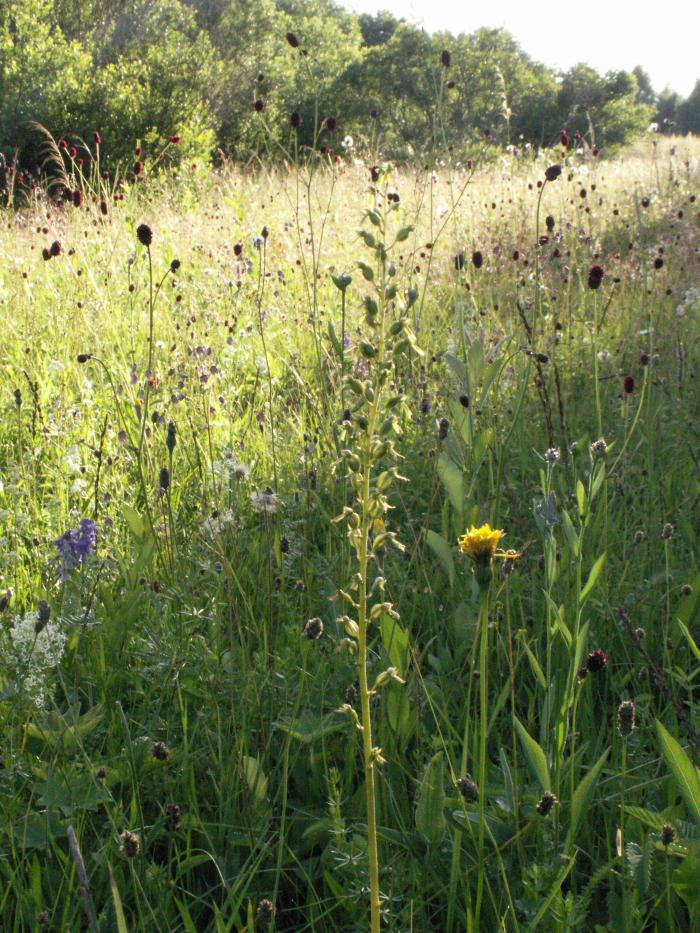 Miškapievės / Artenreiche Waldwiesen