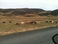 Reykjavik14.jpg: 512x384, 94k (2014 gegužės 10 d., 03:23)